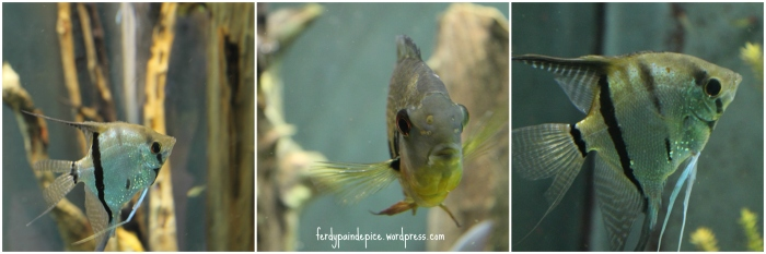 biodome aquarium