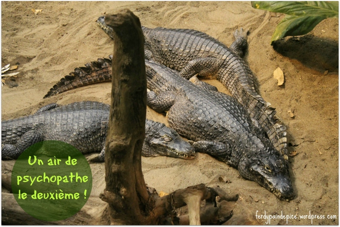 biodome  crocodile