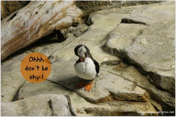 biodome pingouins 1