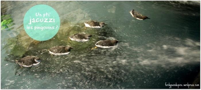 biodome pingouins