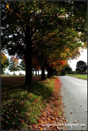 automne 6