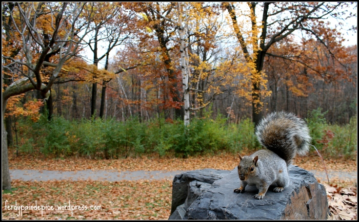 autumn squirel