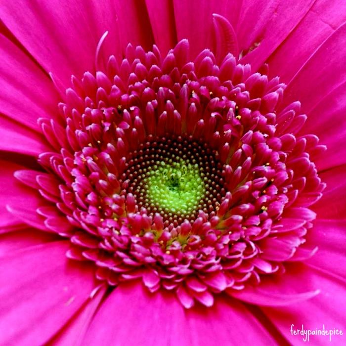 flower ferdy