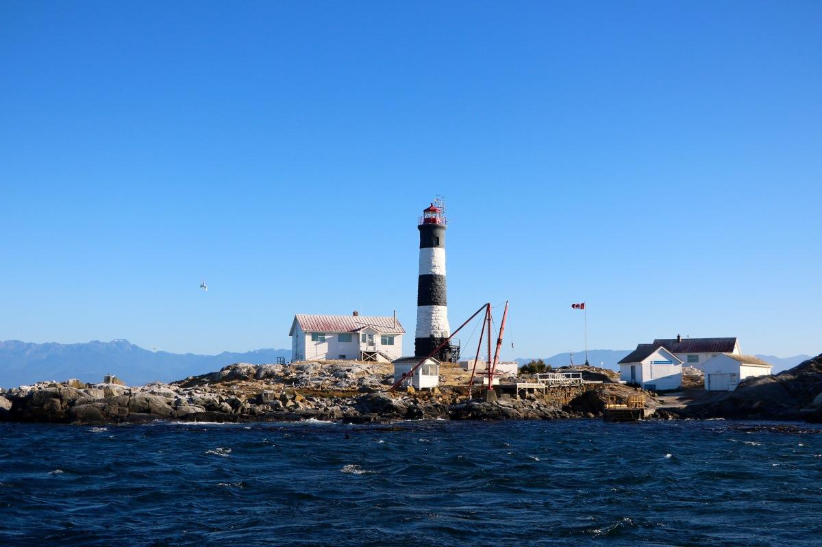 On a vu des Baleines à Victoria - Retour sur notre Expérience !