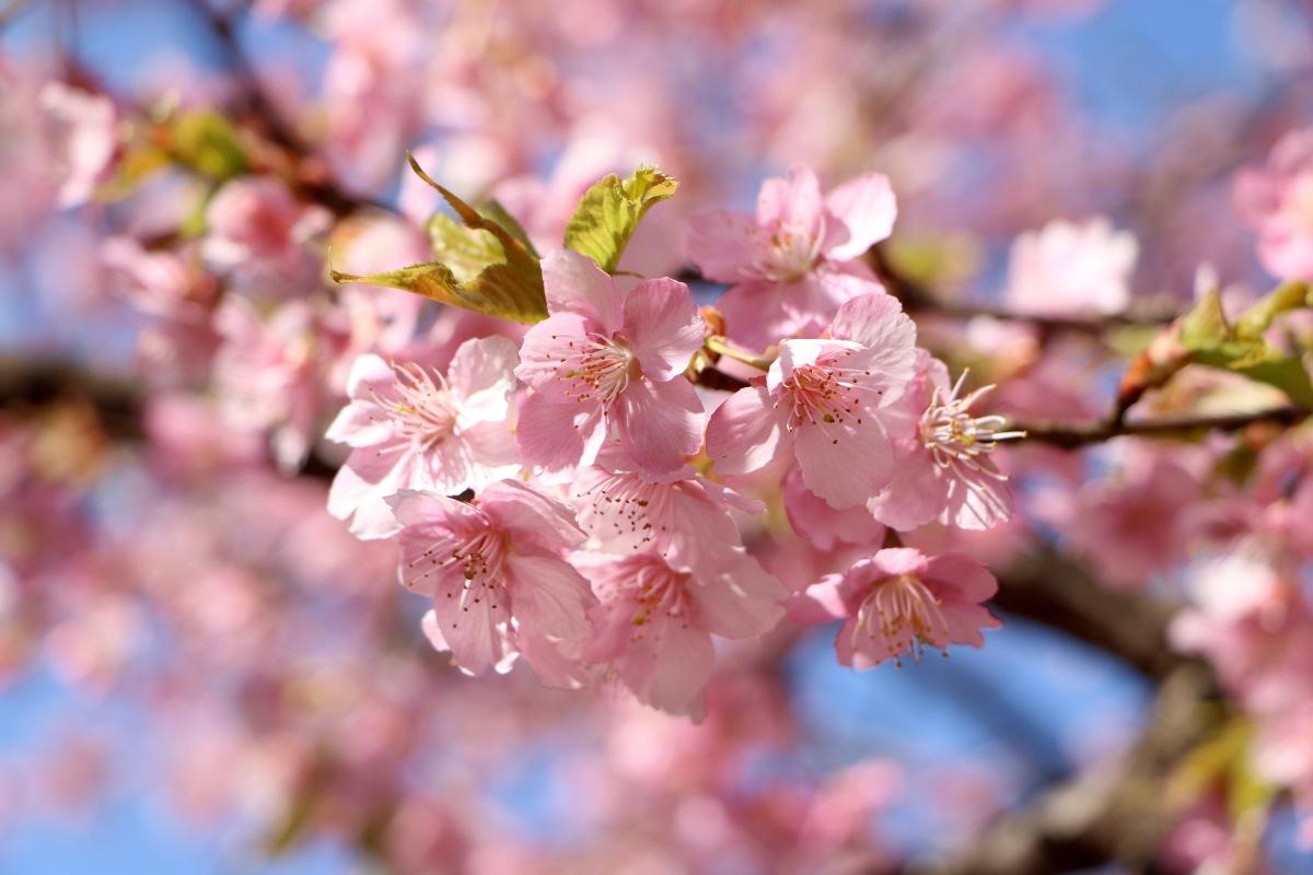 10 Astuces Pour Bien Préparer son Voyage au Japon